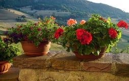 Цветки в патио Стоковые Фото