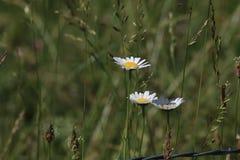 Цветки в поле стоковое фото