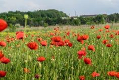 Цветки в поле Стоковые Фотографии RF