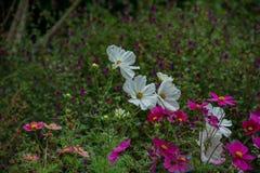 Цветки в поле 4 Стоковые Фото