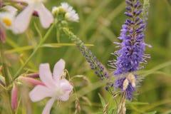 Цветки в поле стоковое изображение rf