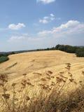 Цветки в полях в Тоскане, Италии Стоковое Изображение RF