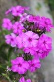 Цветки в предпосылке сада стоковое фото rf