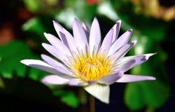 Цветки в природе на предпосылке природы стоковое фото rf