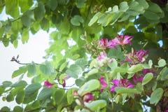 Цветки в провинции Фуцзяня города Xiamen Китая Стоковое Фото