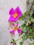 Цветки в пути Стоковые Фотографии RF