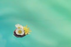 Цветки в раковине грецкого ореха плавают на воду Стоковое Изображение RF