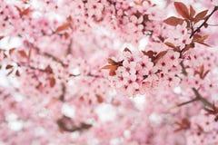 Цветки в розовых цветах Стоковое Изображение RF