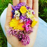 Цветки в руке Стоковая Фотография
