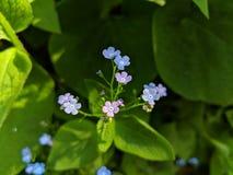 Цветки в саде стоковые изображения