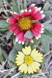 Цветки в саде очаровательном и красочном стоковые изображения