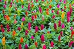 Цветки в саде получают солнечный свет Стоковое Изображение