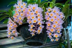 Цветки в саде получают солнечный свет Стоковая Фотография RF