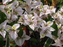 Цветки в саде Стоковая Фотография RF