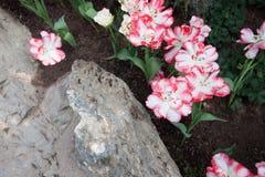 Цветки в саде Chenshan ботаническом Шанхая Стоковые Изображения RF