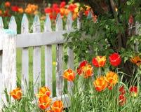 Цветки в саде Стоковое Фото