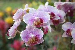 Цветки в саде Стоковое фото RF