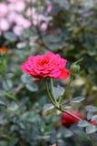 Цветки в саде Стоковые Изображения RF