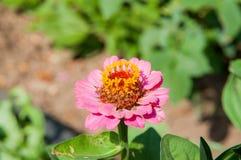 Цветки в саде Стоковые Фото