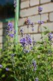 Цветки в саде Стоковое Изображение RF