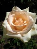Цветки в солнечном саде стоковое изображение