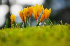 Цветки в солнце стоковые фото