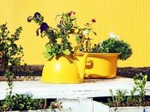 Цветки в старых желтых чайнике и сотейнике на белом деревянном столе Стоковое Изображение