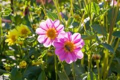 Цветки в траве Стоковое Изображение