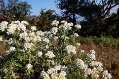 Цветки в тропическом лесе Стоковые Изображения
