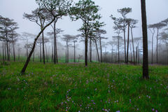 Цветки в тумане Стоковые Фотографии RF