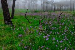 Цветки в тумане стоковое изображение rf