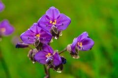 Цветки в тумане стоковая фотография rf