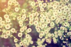 Цветки в луге стоковые фото