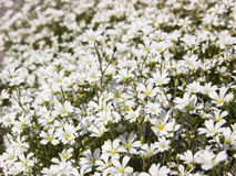 Цветки в луге Стоковые Фотографии RF