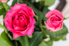 Цветки в утре Стоковые Фото