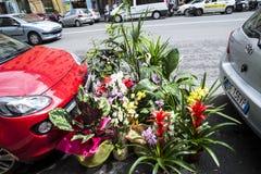 Цветки в улице в Риме Италии Стоковые Фотографии RF