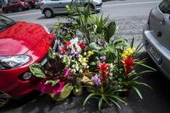 Цветки в улице в Риме Италии Стоковые Изображения RF