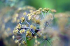 Цветки в фокусе Стоковые Фотографии RF