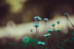 Цветки в фокусе Стоковое Фото