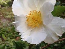 Цветки в цветени Стоковая Фотография