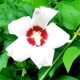 Цветки в цветени Стоковые Фотографии RF