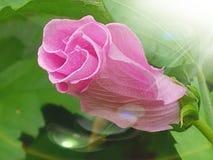 Цветки в цветени Стоковые Изображения