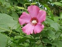 Цветки в цветени Стоковые Изображения RF