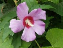 Цветки в цветени Стоковая Фотография RF