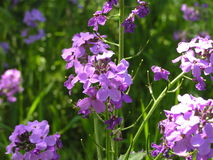 Цветки в цветени Стоковые Фото