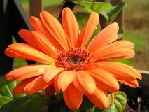 Цветки в цветени Стоковое фото RF