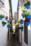 Цветки в цветочном горшке на белых стенах на известной улице цветка Стоковое Изображение
