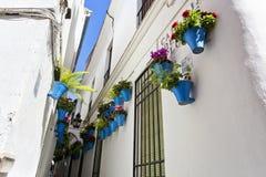 Цветки в цветочном горшке на белых стенах на известной улице цветка Стоковые Изображения