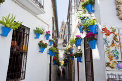 Цветки в цветочном горшке на белых стенах на известной улице цветка Стоковая Фотография RF