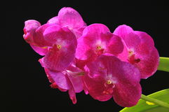 Цветки в черной сцене Стоковые Фотографии RF